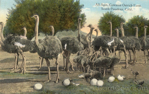 All Ages Cawston Ostrich Farm South Pasadena California