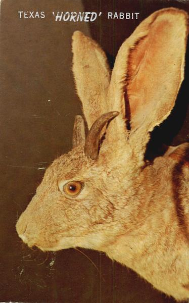 Texas Horned Rabbit
