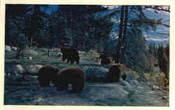 Mother Bear With Cubs, No. 32