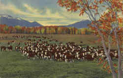 Cattle On The Range In The Southwest