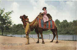 Riding Animal Camel, New York Zoological Park