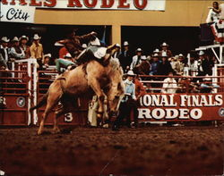 The National Finals Rodeo '76 Large Format Postcard
