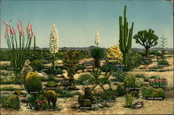 Varieties of Desert Vegetation