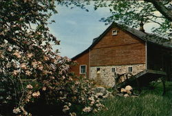 Barn With Cart and Apple Blossoms