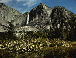 Yosemite Falls, Yosemite Point, Azaleas