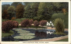 Lily Pond in McKinley Park