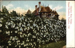 Cherokee Rose Hedge, Durand Residence