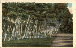 The Birch Drive, Spot Pond