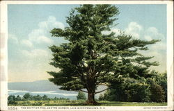 The Whittier Pine, Centre Harbor