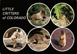 Little Critters of Colorado