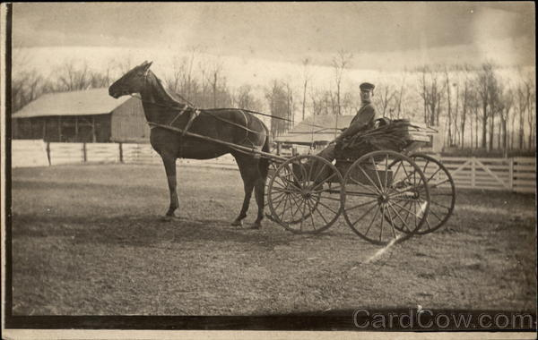 Man in Horse Drawn Carriage Horses