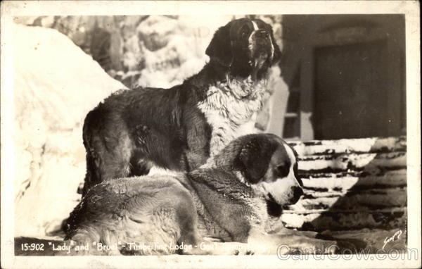 Lady and Bruel Timberline Lodge Saint Bernards
