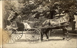Man Driving Horse Drawn Carriage