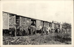 Loading Bananas Onto Train