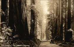 Car on the Redwood Highway