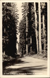 Highway through the Timber of Washington