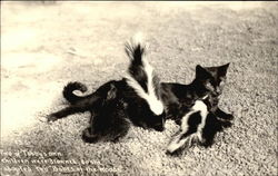 Tabby Cat Adopts Baby Skunks