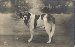 St. Bernard Poses Before Landscape Backdrop