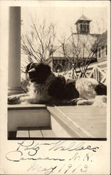 St. Bernard on Porch