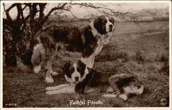 Faithful Friends - St. Bernard