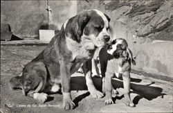 Saint Bernard Dog and Puppy