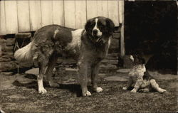 St. Bernard and Puppy