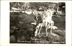 Pal and Bambi of Trout Valley Lodge