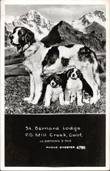 St. Bernard Lodge