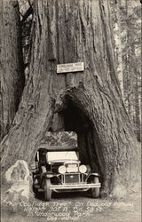 The Coolidge Tree