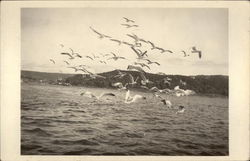 Gulls Flying over the Ocean