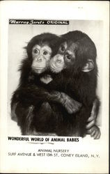 Wonderful World of Animal Babies - Chimpanzees
