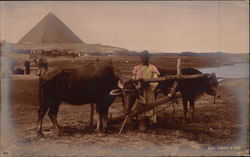 Labourer with Ox-Cart and Pyramid Postcard