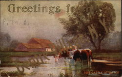 5583 Cattle At Water Postcard