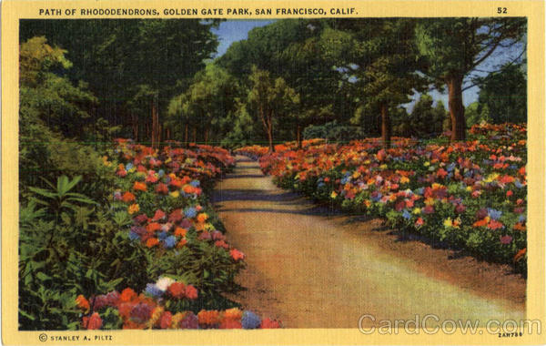Path of Rhododendrons, Golden Gate Park San Francisco California