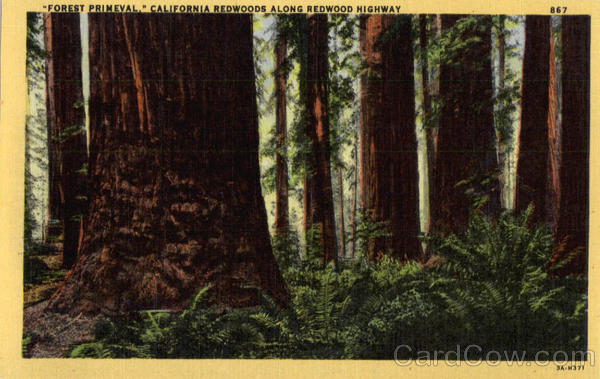 Forest Primeval, California Redwoods along Redwood Highway