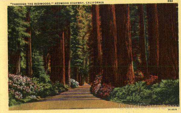 Through The Redwoods Redwood Highway California