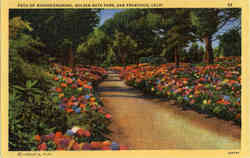 Path of Rhododendrons, Golden Gate Park