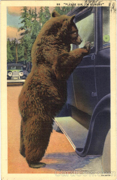 Please Sir, I'm Hungry Bear Bears