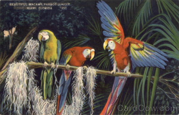 Beautiful Macaws, Parrot Jungle Miami Florida
