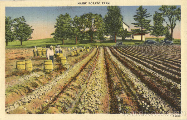 Maine Potato Farm Scenic Farming