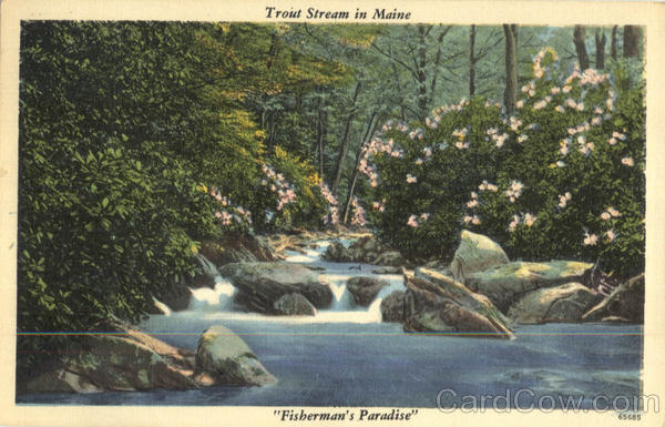 Trout Stream In Maine Scenic