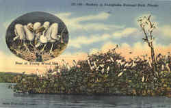 Rookery In Everglades National Park