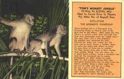 Tom's Monkey Jungle, Hi-Way 54