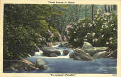 Trout Stream In Maine