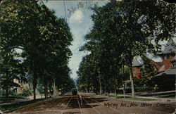 Whitney Avenue Postcard