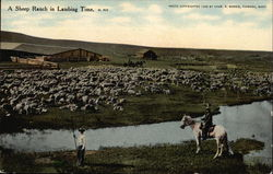 A Sheep Ranch in Lambing Time