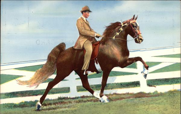 Setting Sun - 1958 World's Grand Champion Walking Horse Newport Tennessee