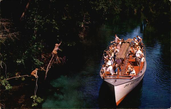 Jungle Cruise at Florida's Silver Springs