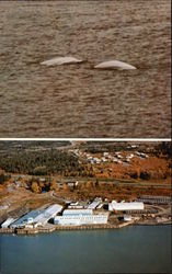 White Beluga Whales and Kenai Packers Commercial Salmon Cannery Postcard