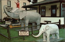 Perry's Nut House Famous Elephants